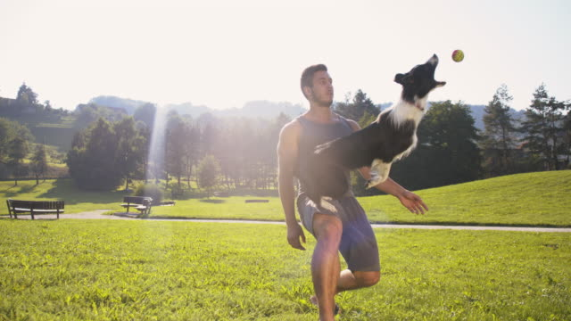slo mo young man training his dog catching a ball - stunt stock videos & royalty-free footage
