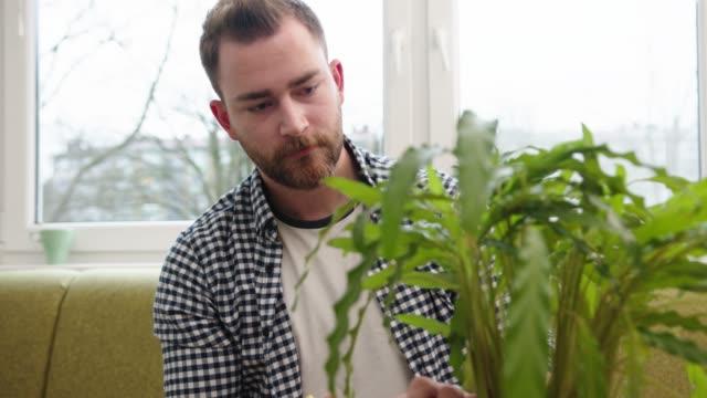 vídeos y material grabado en eventos de stock de joven recortando las hojas de la planta usando tijeras - jardinería