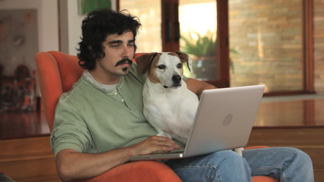 vídeos de stock, filmes e b-roll de ms young man using laptop with dog on lap / richmond, virginia, usa - só um homem jovem