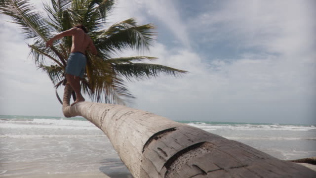 ws young man walking along palm tree trunk leaning over beach before jumping off onto sand/ scarborough, tobago, trinidad and tobago - badeshorts stock-videos und b-roll-filmmaterial