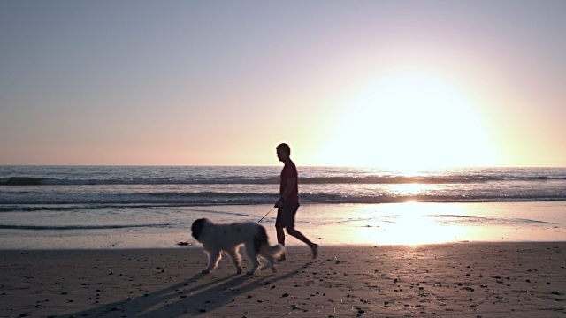 vídeos y material grabado en eventos de stock de ws young man walking his dog on the beach at sunset - vista de costado