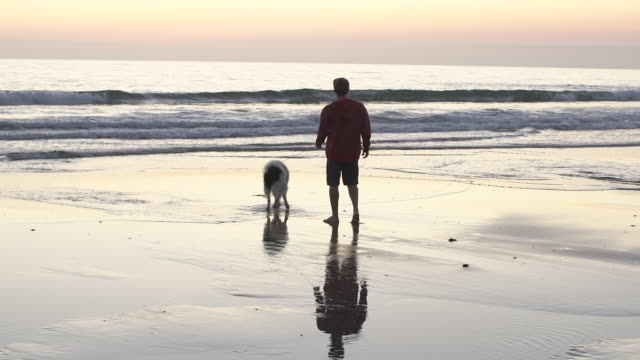 WS Young man walking his dog on the beach at sunset