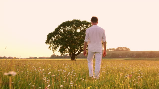 ws young man walking on a meadow - campo video stock e b–roll