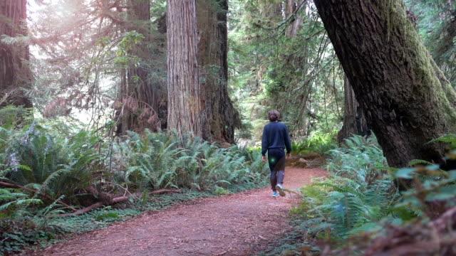 young man walking true prairie creek redwoods state park between gigantic sequoia trees - sequoia stock videos & royalty-free footage