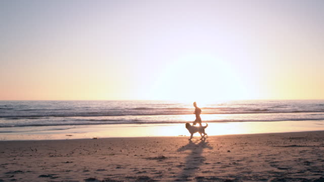 ws young man walking with his dog along the beach at sunset - lockdown viewpoint stock videos & royalty-free footage