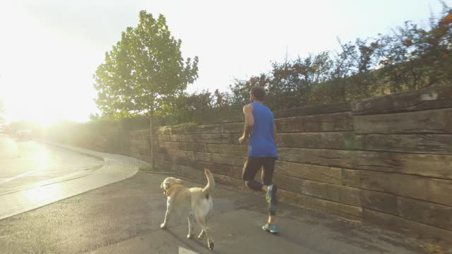 young man with dog at outdoor sport - sports training stock videos & royalty-free footage
