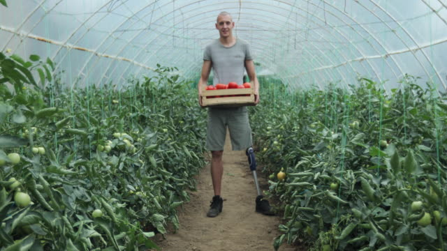 young man with prosthetic leg love growing tomatoes - amputee stock videos & royalty-free footage