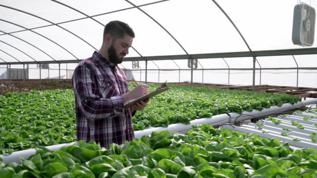 pu ms young man working in a hydroponic farm - hydroponics stock videos & royalty-free footage