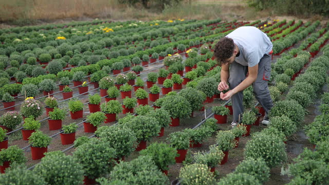 young man working in garden - plant bulb stock videos & royalty-free footage