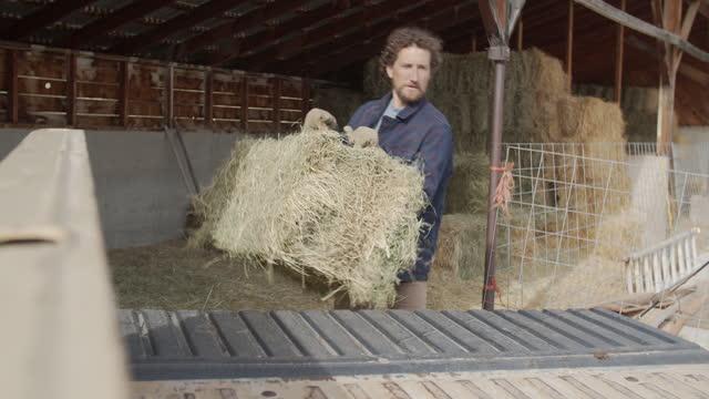 young man working on a farm - 干し草点の映像素材/bロール