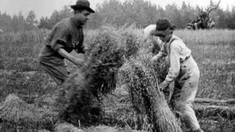 vídeos y material grabado en eventos de stock de young men farming fields, harvesting wheat / plowing field with horse-drawn plow / wheat thresher - arar