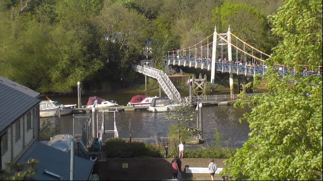 young minke whale swiming in river thames near teddington lock - hd format stock videos & royalty-free footage