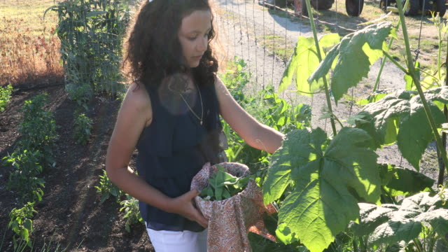 young mixed race girl picks vegetables, at organic farm - mixed race person stock videos & royalty-free footage