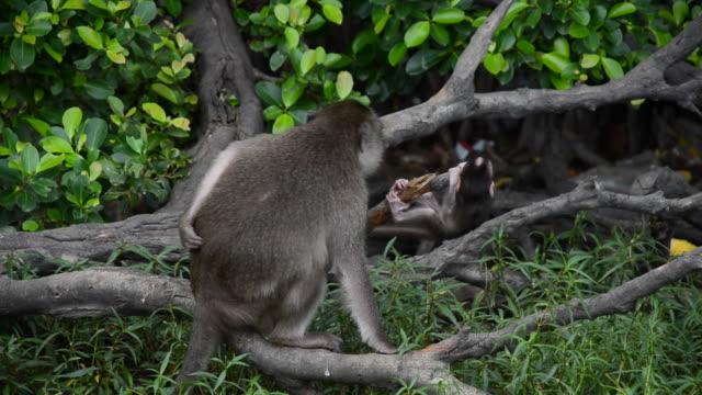 vídeos y material grabado en eventos de stock de joven jugando monos - palo parte de planta