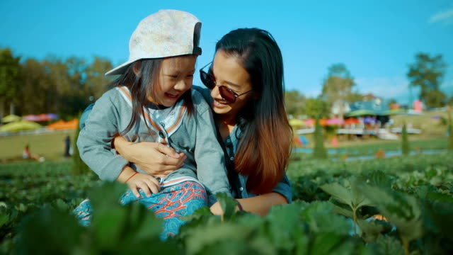 Young Mother And Daughter Picking Strawberries In A Farm