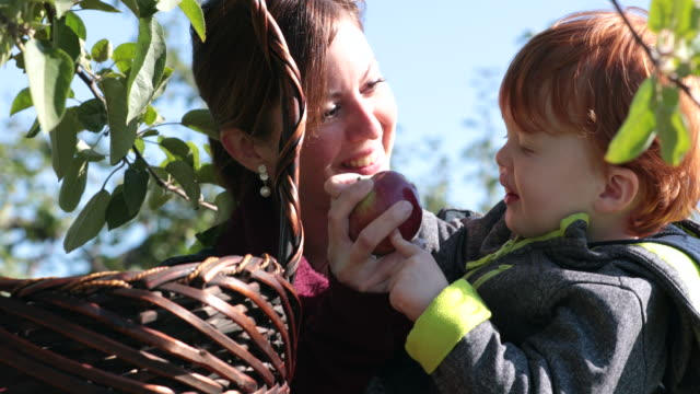 young mother and her son picking apples and having fun in orchard, quebec, canada - mela video stock e b–roll