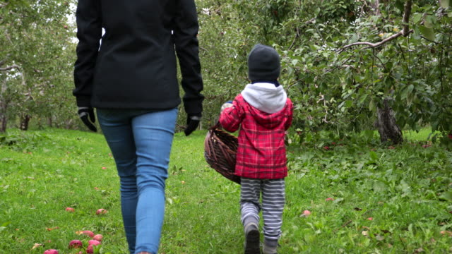 young mother and her son picking apples and having fun in orchard, quebec, canada - apple orchard stock videos & royalty-free footage