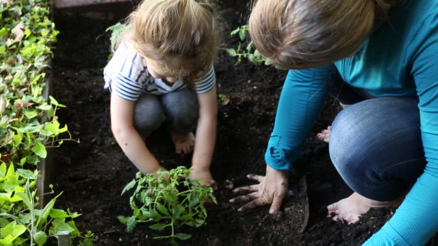 a young mother and her toddler daughter working together outside in a home garden. - omsorg bildbanksvideor och videomaterial från bakom kulisserna