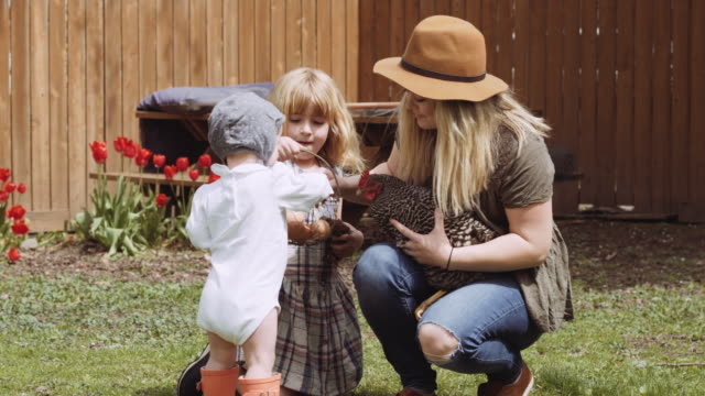 young mother with children sitting with chickens in yard - chicken coop stock videos & royalty-free footage