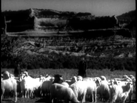 vídeos de stock e filmes b-roll de 1939 montage ms young navajo woman standing in field with sheep / southwest united states / audio - cultura navajo