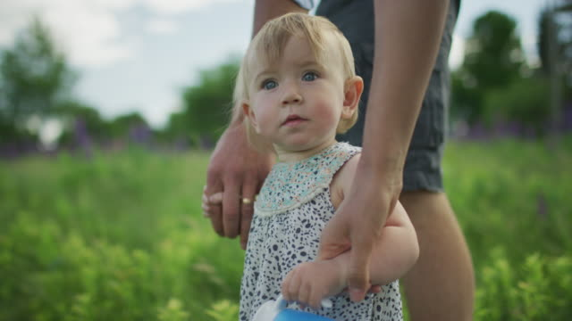 vidéos et rushes de young parents walking through a field of lupine with their infant daughter - plante sauvage
