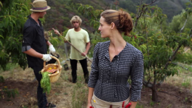 ms slo mo young people together gardening in beautiful orchard / big sur, california, usa - gardening glove stock videos & royalty-free footage