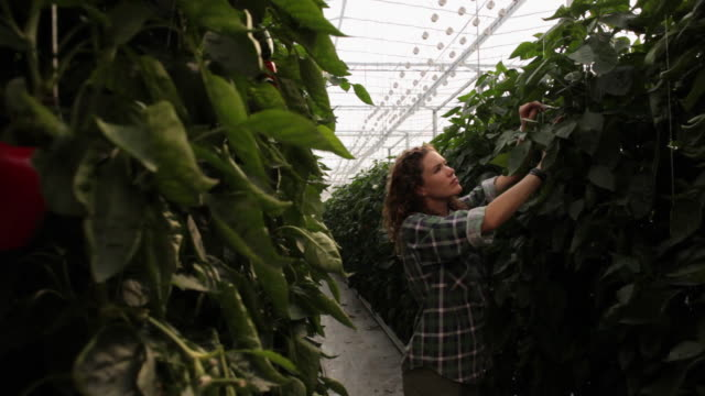 ws pan young people working in greenhouse / perth, australia - greenhouse stock videos & royalty-free footage