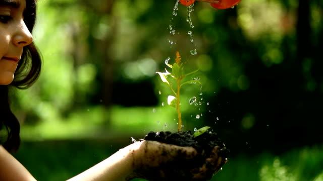 vídeos y material grabado en eventos de stock de joven planta  - protección