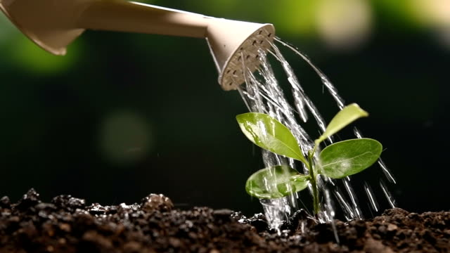 young plant watered from a watering can slow motion - watering can stock videos & royalty-free footage