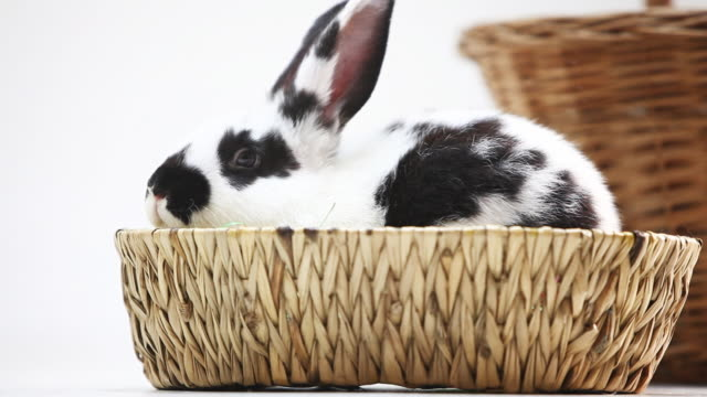 young rabbit in a basket against white background - 20 seconds or greater stock videos & royalty-free footage