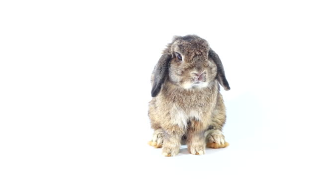 young rabbit - brown stock videos & royalty-free footage