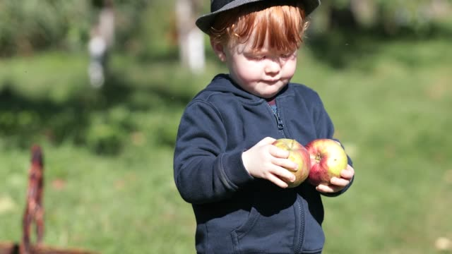 young redhead baby boy picking apples in orchard - orchard stock videos & royalty-free footage