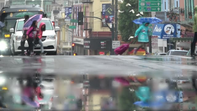 young school children with umbrellas are crossing a busy city street on a rainy day. - north beach san francisco stock videos and b-roll footage