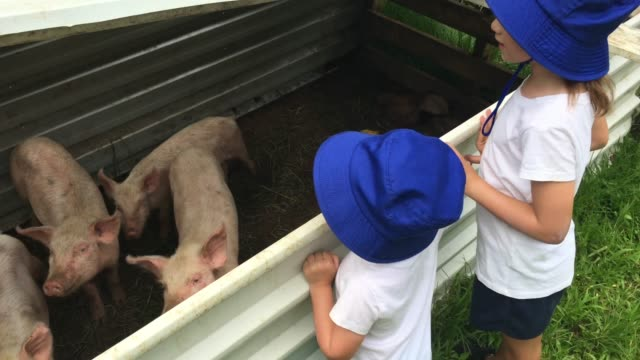 Young sister girls looks at a domesticated piglets