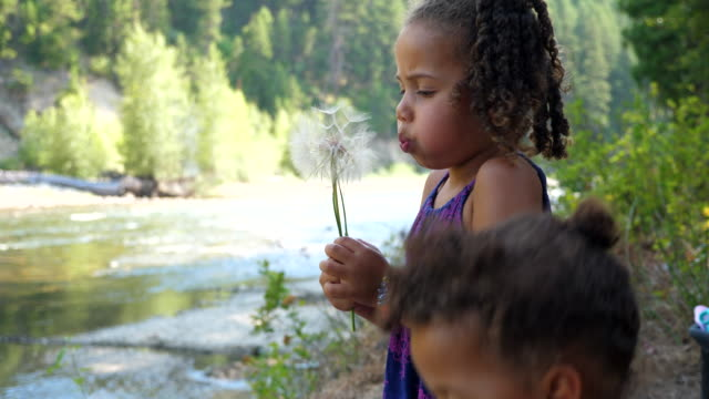 cu young sisters blowing on giant dandelions - curiosity stock videos & royalty-free footage