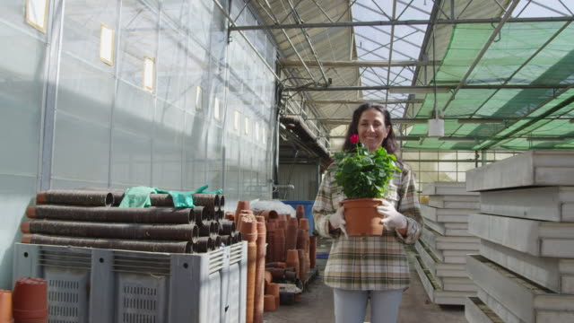 DS MS young, smiling woman carrying pot with red rose bush through greenhouse towards camera, walks past camera, RED R3D 4K