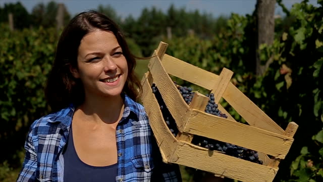 young smiling women picking red grapes in her vineyard