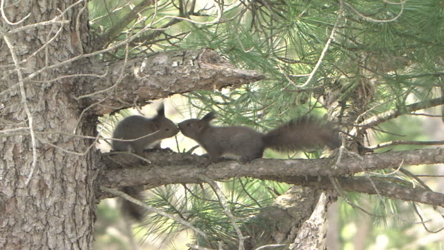 Young Squirrels On Tree