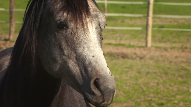 young stallion - irritation stock videos & royalty-free footage