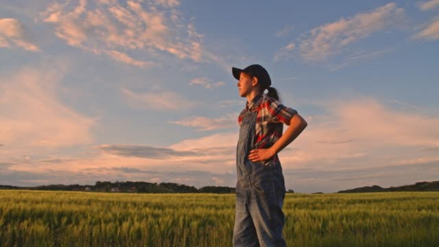 Young teenage girl farmer walking in sunny,idyllic rural wheat field at sunset,slow motion
