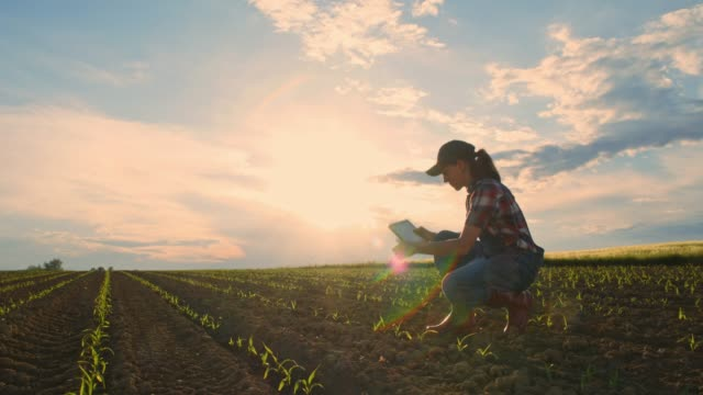 young teenage girl farmer with digital tablet checking saplings in sunny,rural field,slow motion - inarcare la schiena video stock e b–roll