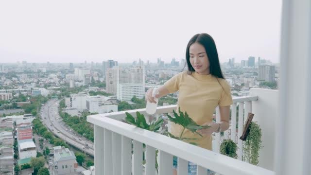 vídeos de stock, filmes e b-roll de jovem tailandesa regando sua planta em seu espaço comfine -estoque vdo - sacada