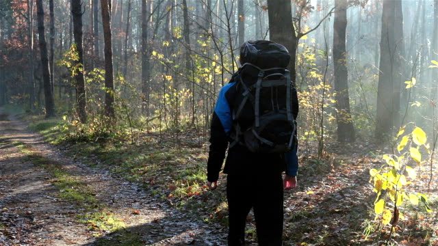 young traveler explores the forest. - zaino da montagna video stock e b–roll