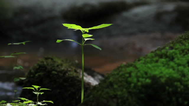 Young Tree Plant Growing In Forest