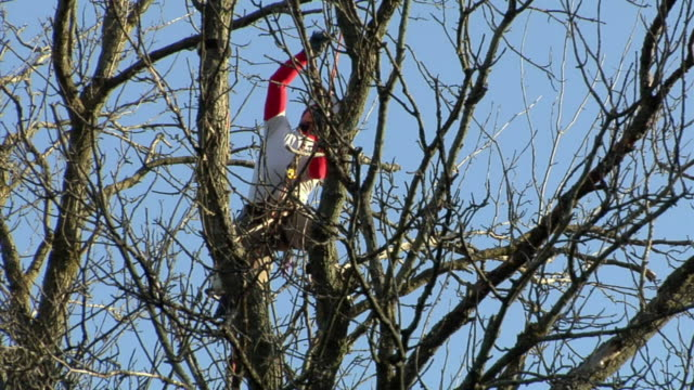 zo ws la young tree trimmer on top of large ash tree, ann arbor, michigan, usa - ash tree stock videos & royalty-free footage