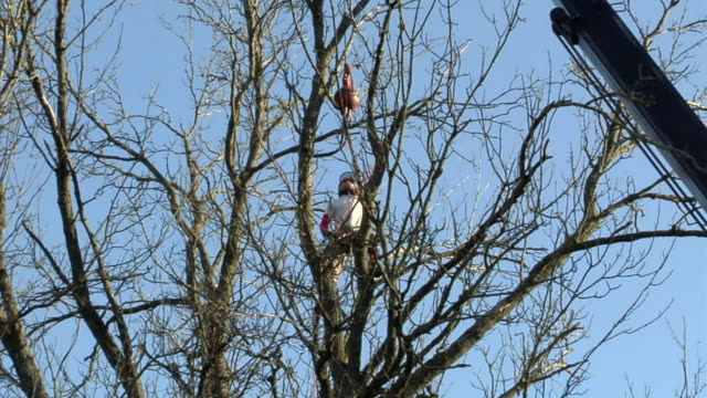 ws la young tree trimmer on top of large ash tree, ann arbor, michigan, usa - ash tree stock videos & royalty-free footage