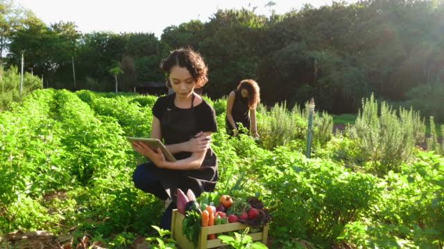 vídeos de stock, filmes e b-roll de jovem usando tecnologia em sua plantação. conceito de horta familiar - culturas