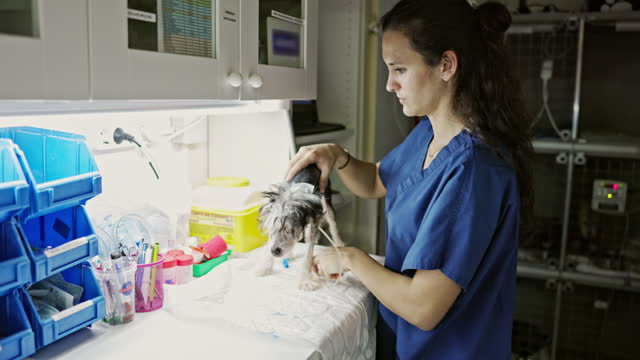 young veterinary technician providing post operative care - clinic stock videos & royalty-free footage