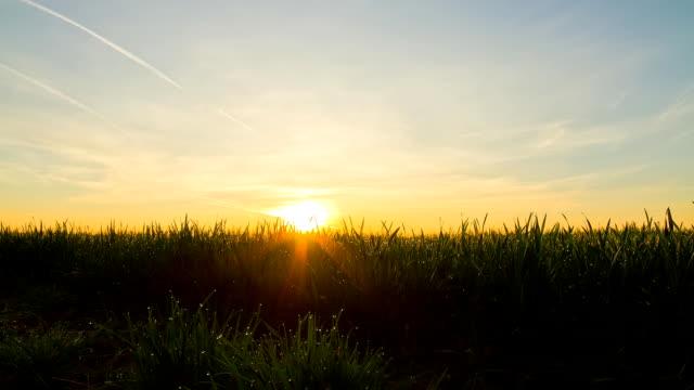 vidéos et rushes de hd time-lapse: jeune blé au lever du soleil - herbe