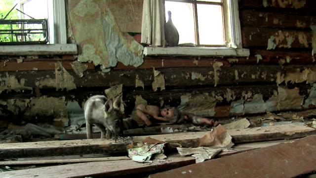 stockvideo's en b-roll-footage met young wolf - kernramp van tsjernobyl